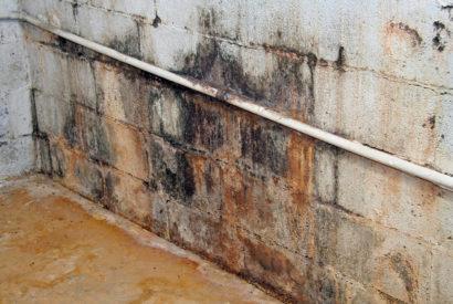 mold shutterstock